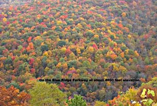 2003 fall foliage on Blue Ridge Parkway at about 4500 feet elevation.