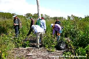 University of Miami botany students researching exotic plant regrowth in Flamingo, Everglades National Park.